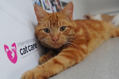 Cat Friendly Vet Practice Blog