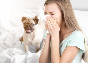 Sneezing cant infect animals with Coronavirus but can still infect humans around you